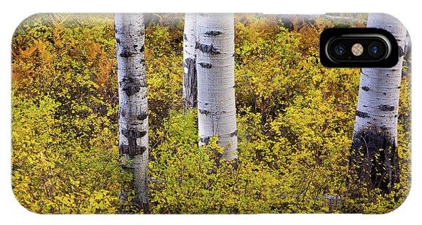 Autumn Contrasts IPhone Case