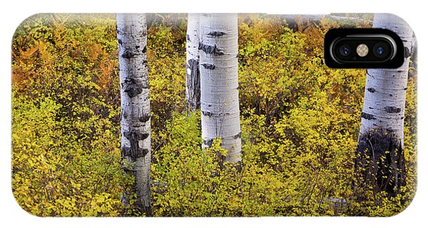 IPhone Case featuring the photograph Autumn Contrasts by John De Bord