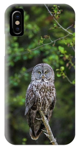 IPhone Case featuring the photograph B16 by Joshua Able's Wildlife