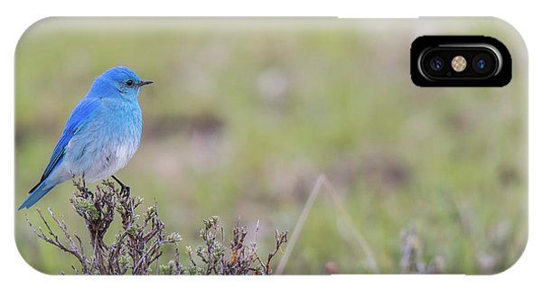 IPhone Case featuring the photograph B23 by Joshua Able's Wildlife