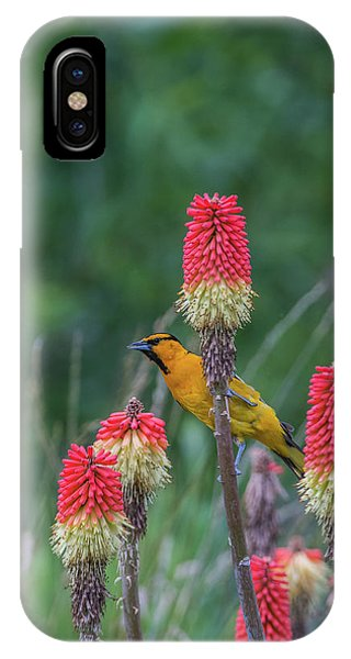 IPhone Case featuring the photograph B56 by Joshua Able's Wildlife