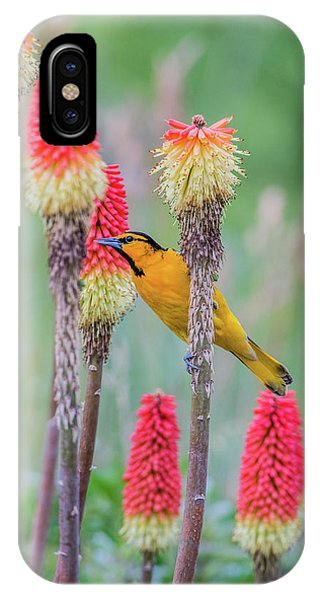 IPhone Case featuring the photograph B59 by Joshua Able's Wildlife