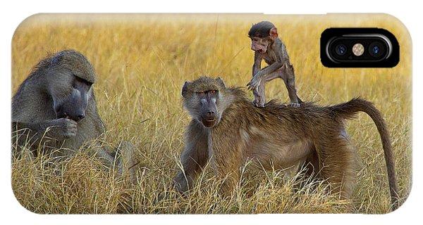 Baboons In Botswana IPhone Case