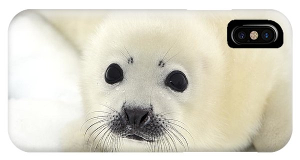 Baby Harp Seal Pup On Ice Of The White Phone Case by Vladimir Melnik