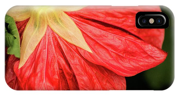 Back Of Red Flower IPhone Case
