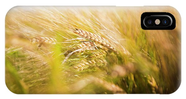 Background Of Ears Of Wheat In A Sunny Field. IPhone Case