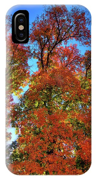 IPhone Case featuring the photograph Backlit Autumn by David Patterson