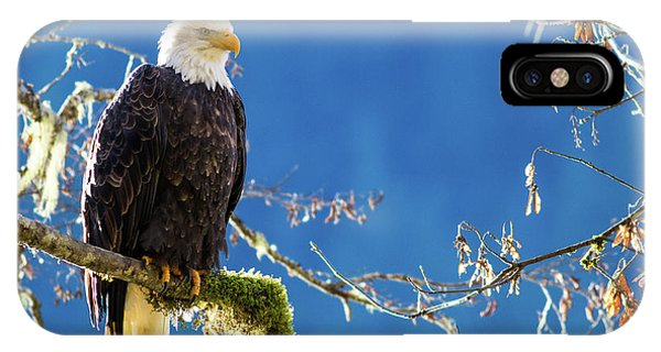 Backlit Bald Eagle In Squamish IPhone Case