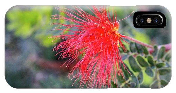 Baja Fairy Duster IPhone Case