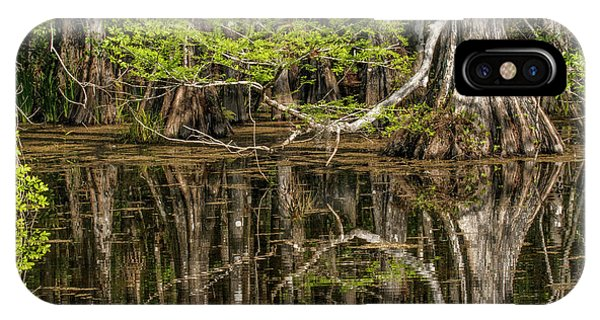 Bald Cypress iPhone Case - Bald Cypress Trees And Reflection, Six by Adam Jones