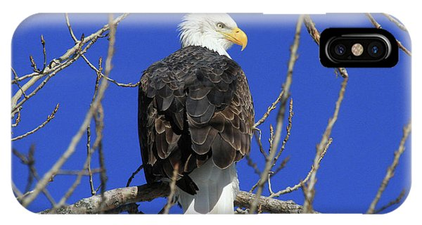 Bald Eagle And Blue Sky IPhone Case
