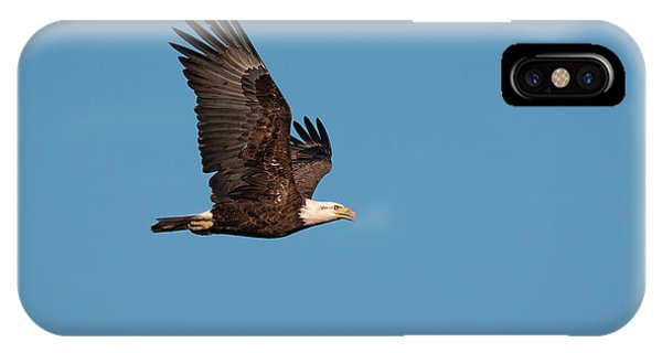 Bald Eagle Flyby IPhone Case