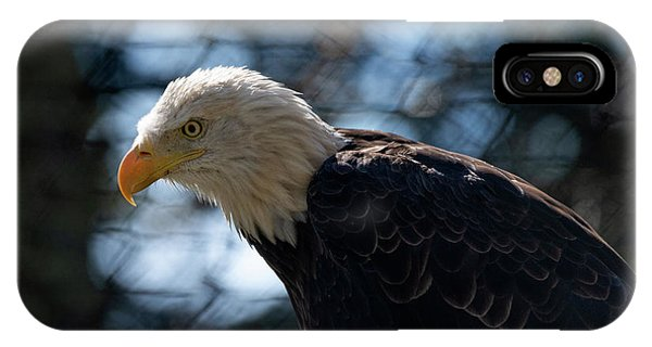 Bald Eagle Grandfather Mountain IPhone Case