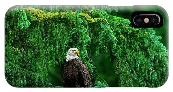 Bald Eagle In Temperate Rainforest Alaska Endangered Species IPhone Case