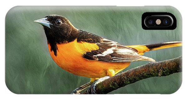 IPhone Case featuring the photograph Baltimore Oriole  by Allin Sorenson