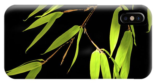 Bamboo Leaves 0580a IPhone Case