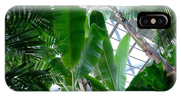 Banana Leaves In The Greenhouse IPhone Case