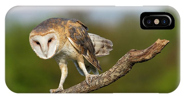 Barn Owl 5151801 IPhone Case