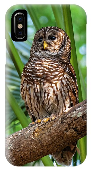 Barred Owl On Perch IPhone Case