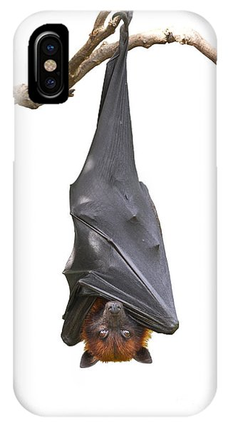 Bat iPhone X Case - Bat,lyles Flying Fox Pteropus by Worraket