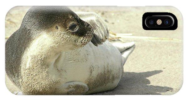 Beach Seal IPhone Case