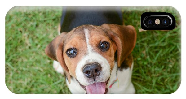 Small iPhone Case - Beagle Puppy Sitting On Green Grass by Mr.es