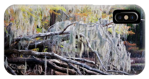 Bald Cypress iPhone Case - Beard Lichen by Lana Trussell