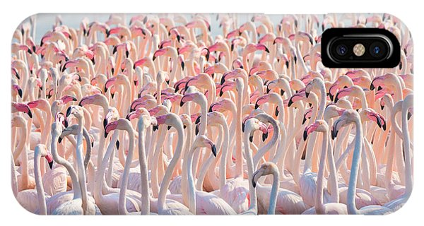 Great Lakes iPhone Case - Beautiful And Wild - Flamingos by Keyur Athaide