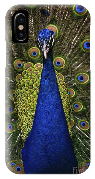 Peafowl iPhone Case - Beautiful Bird, Male Of Indian Peacock by Ondrej Prosicky