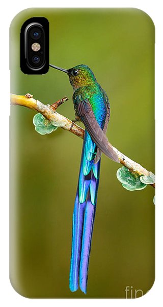 Colombian iPhone Case - Beautiful Blue Glossy Hummingbird With by Ondrej Prosicky