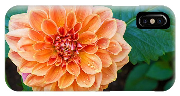 Bouquet iPhone Case - Beautiful Dahlia Flower And Water Drop by Luckypic