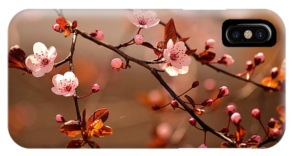 Botany iPhone Case - Beautiful Flowering Japanese Cherry - by Montypeter