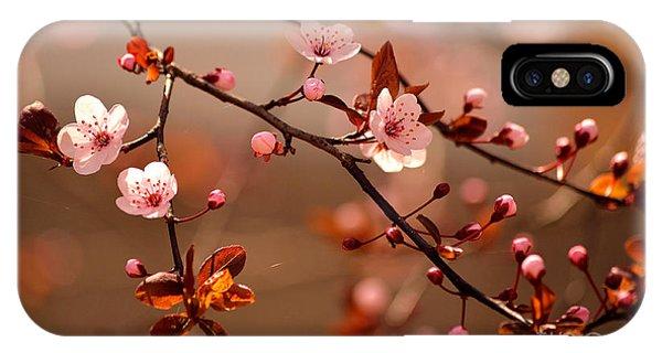 Botanical Garden iPhone Case - Beautiful Flowering Japanese Cherry - by Montypeter