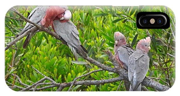 Wilsons Promontory iPhone Case - Beautiful Galah Birds With Babies. Wilsons Promontory National Park, Australia by Jen Beck