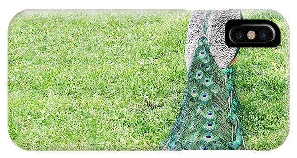 Peafowl iPhone Case - Beautiful Male Peacock On The Grass by Valentina Photos
