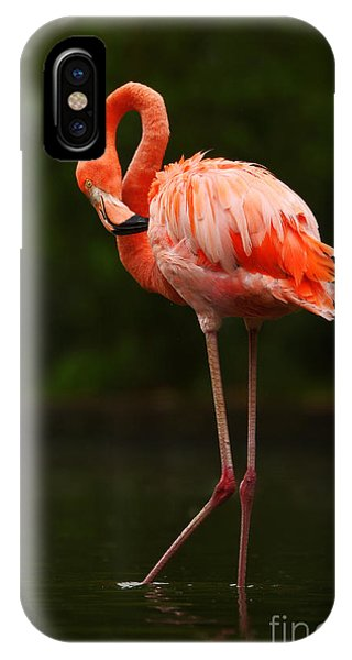 Great Lakes iPhone Case - Beautiful Pink Big Bird Caribbean by Ondrej Prosicky