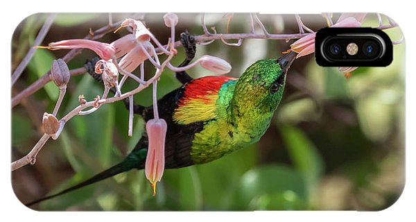 IPhone Case featuring the photograph Beautiful Sunbird by Thomas Kallmeyer