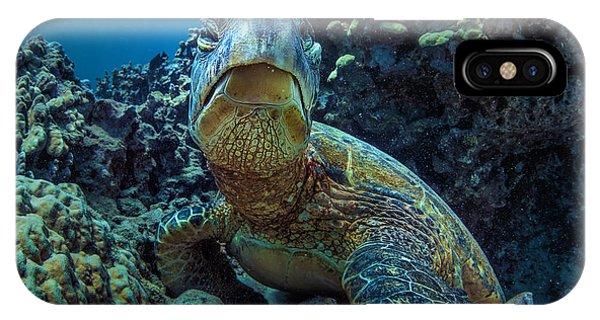 Dive iPhone Case - Beautiful Underwater Wildlife Postcard by Willyam Bradberry
