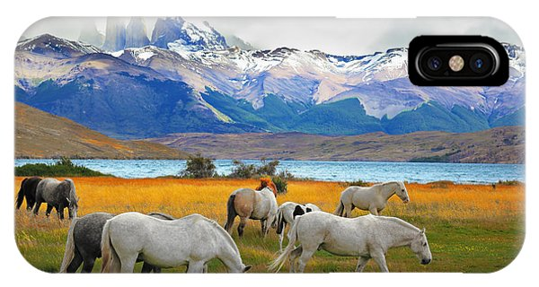 White Mountains iPhone Case - Beautiful White And Gray Horses Grazing by Kavram