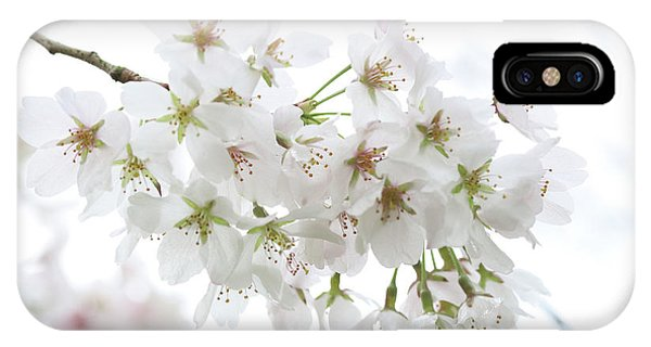 Beautiful White Cherry Blossoms IPhone Case