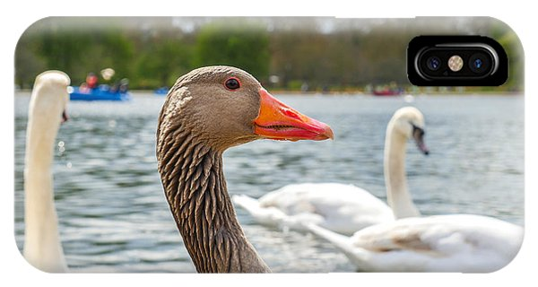 Swan iPhone Case - Beautiful Young Swans In Lake Wildlife by Freeprod33