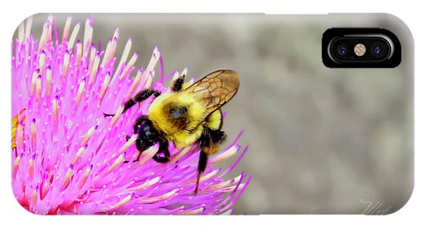 Bee On Pink Bull Thistle IPhone Case