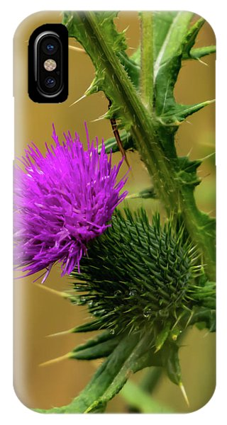 Between The Flower And The Thorn IPhone Case