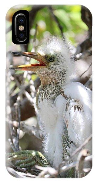 iPhone Case - Big Baby Great Egret by Carol Groenen