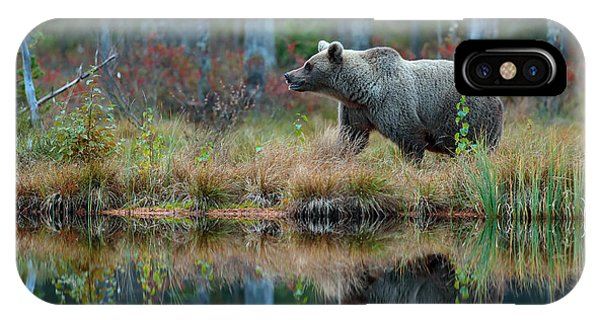 Swedish iPhone Case - Big Brown Bear Walking Around Lake In by Ondrej Prosicky