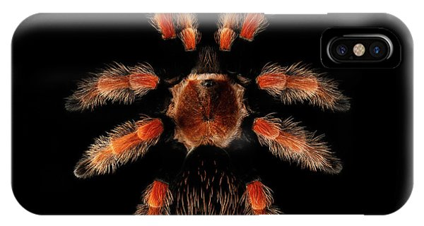 Big Spider Brachypelma Boehmei IPhone Case
