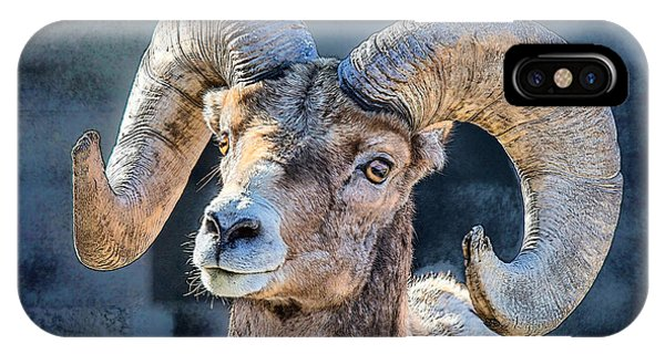 IPhone Case featuring the digital art Bighorn Sheep by Pennie McCracken