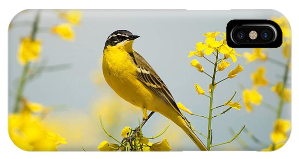 Blossom iPhone Case - Bird In Yellow Flowers, Rapeseed by Belu Gheorghe