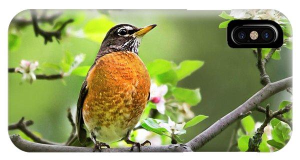 Birds - American Robin - Nature's Alarm Clock IPhone Case