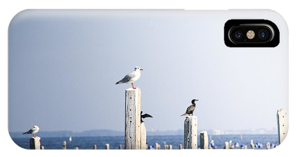 Columns iPhone Case - Birds And Wildlife Concept - Seagull On by Dinfoto